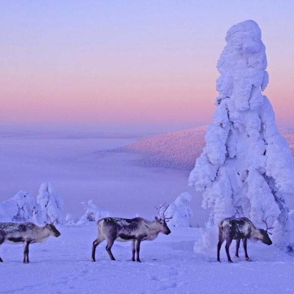 Финландия - suntravel.bg